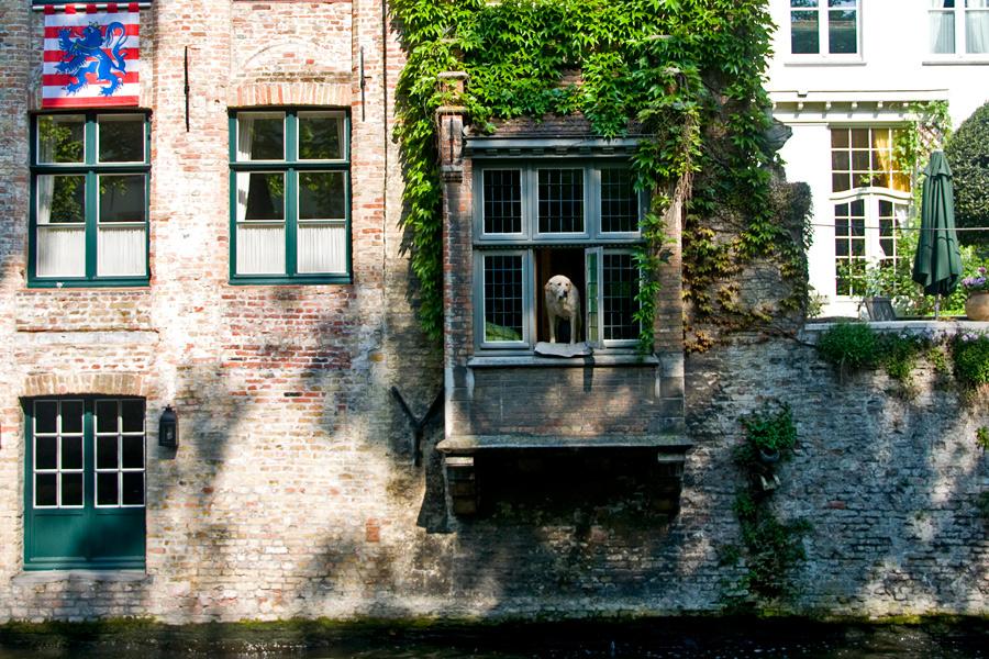 Пес в Брюгге