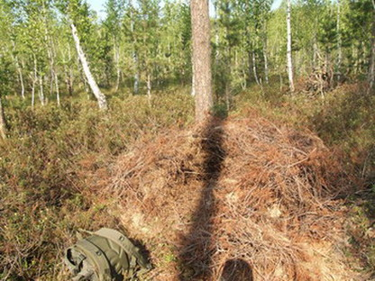 Берлога-шалаш в Брянском лесу