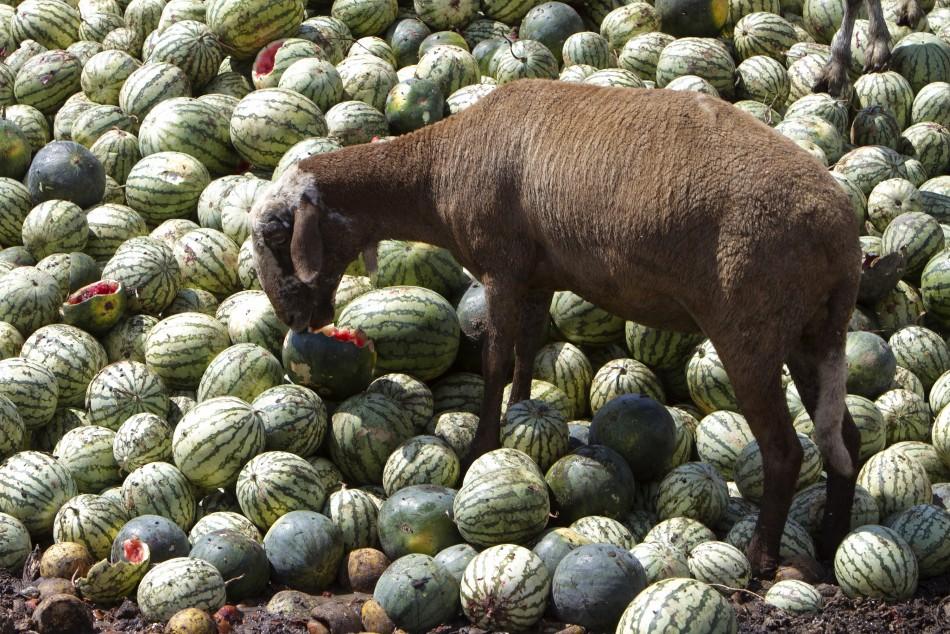 Испанские арбузы
