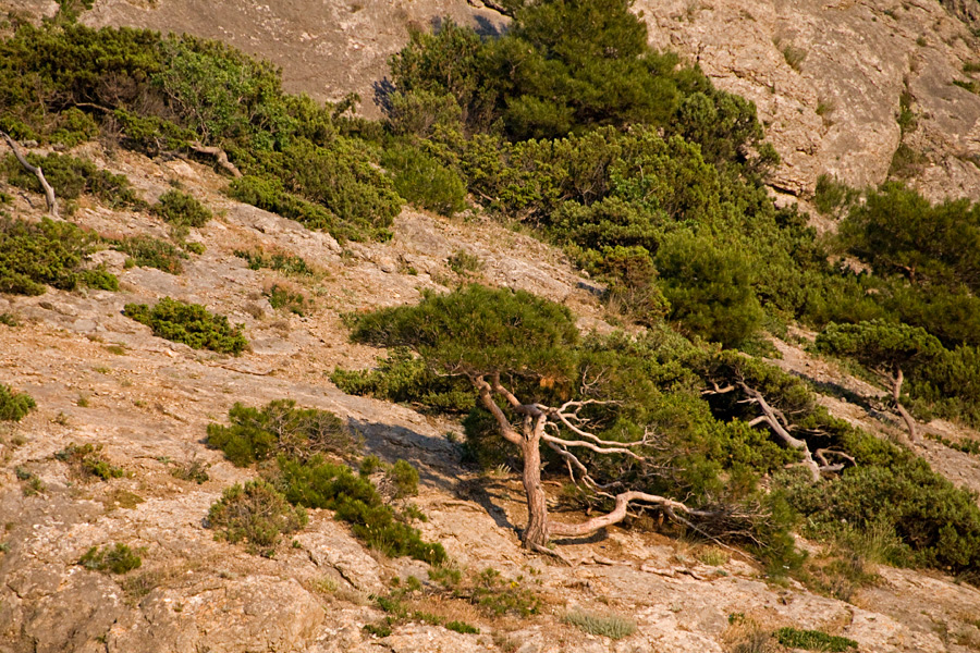 Растительность крымских гор
