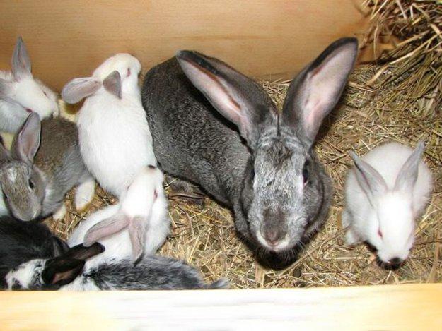 Кроликов кормили коноплей