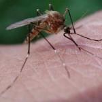 Чемпионат по убийству комаров в Латвии
