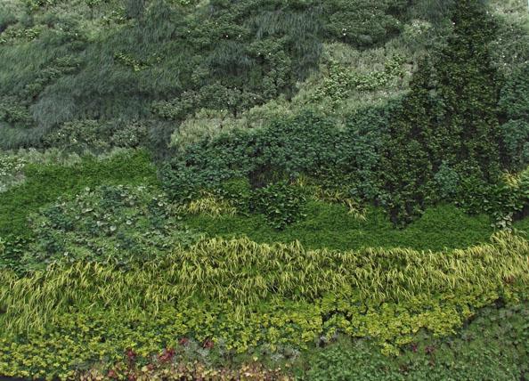Ботаническая архитектура - Пшеничное поле с кипарисами