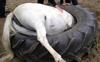 Пони застрял в огромной шине