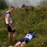 Нападение лося на участника забега в Норвегии