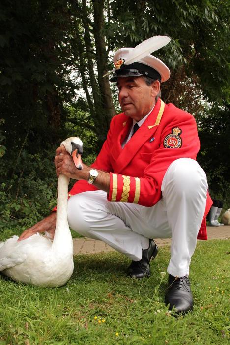 Ежегодная перепись королевских лебедей на Темзе