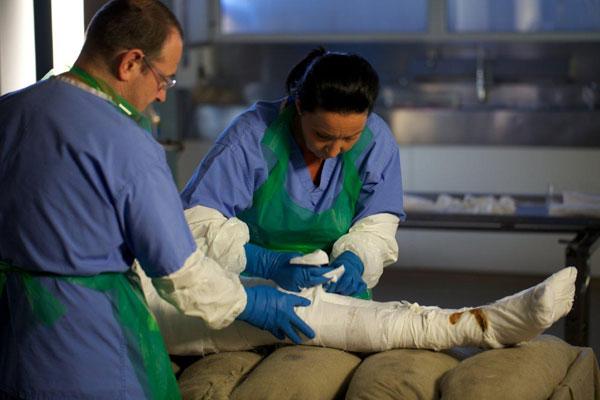 Ученые Йоркского Университета работают над созданием мумии