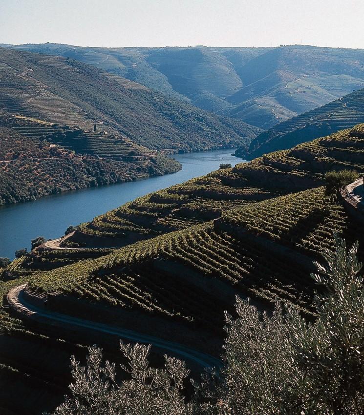 Виноградники Douro Valley