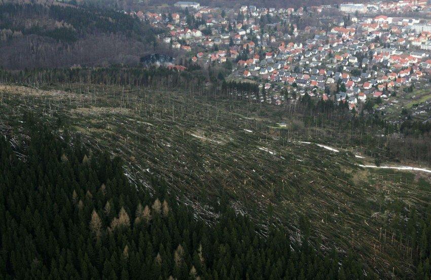 60 млн. деревьев легли под натиском шторма Кирилл, январь 2007 года