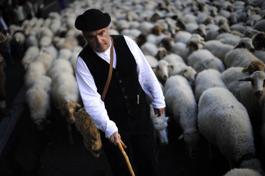 Испанские пастухи гонят тысячи овец через центр Мадрида, 30 октября 2011