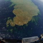 Зеленые подводные пятна у побережья Канарских островов