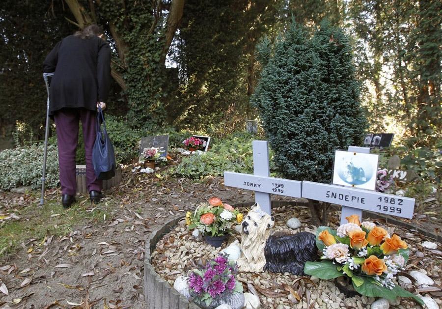 Кладбище домашних животных в Бельгии