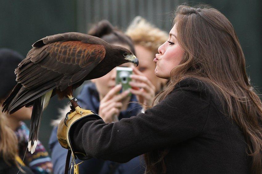 Мисс Перу - поцелуй сокола
