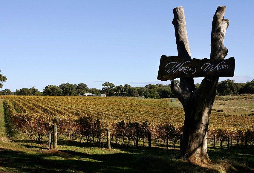 Южные страны и регионы страдают от засухи и постепенно теряют вековые плантации винограда