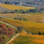 Виноградники Кьянти Классико, 2 ноября, Пассиньяно, Тоскана