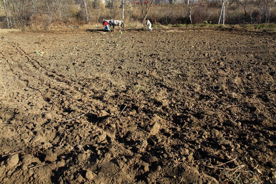 Ни о какой механизации речь не идет, землю пашут дедовскими методами