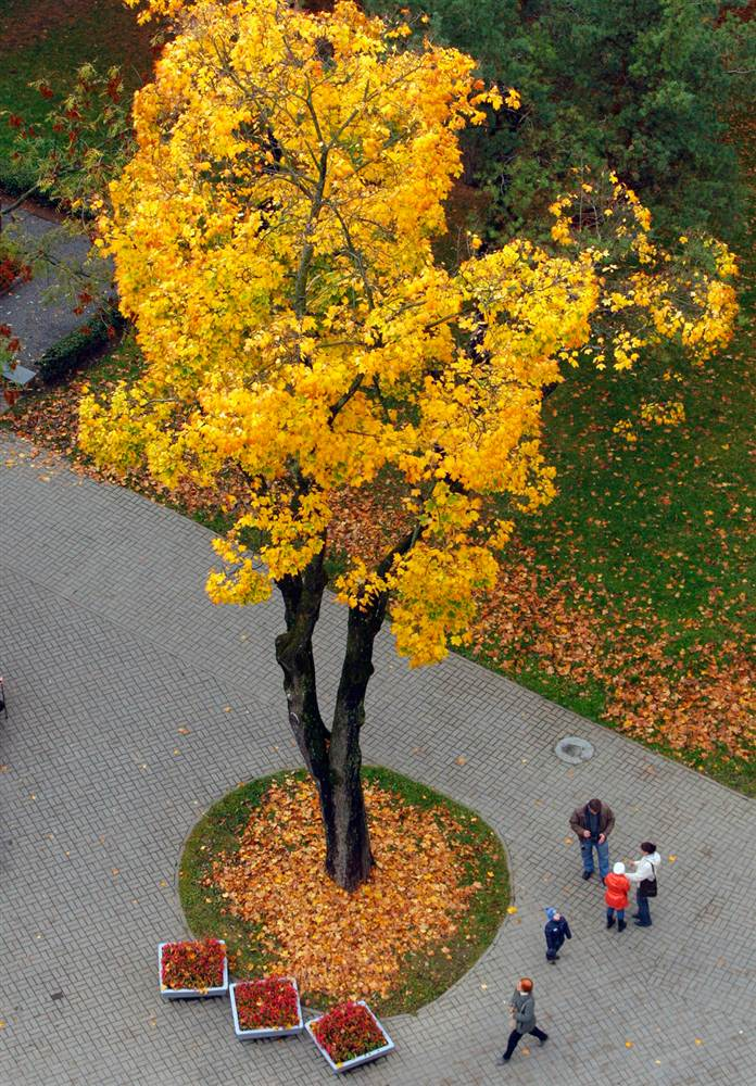 Люди идут по парку в Минске