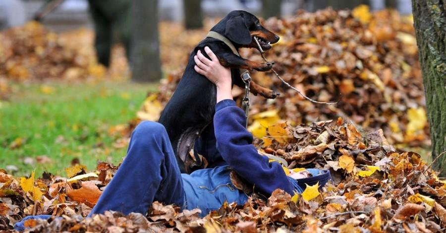 Мальчик играет с собакой, Минск