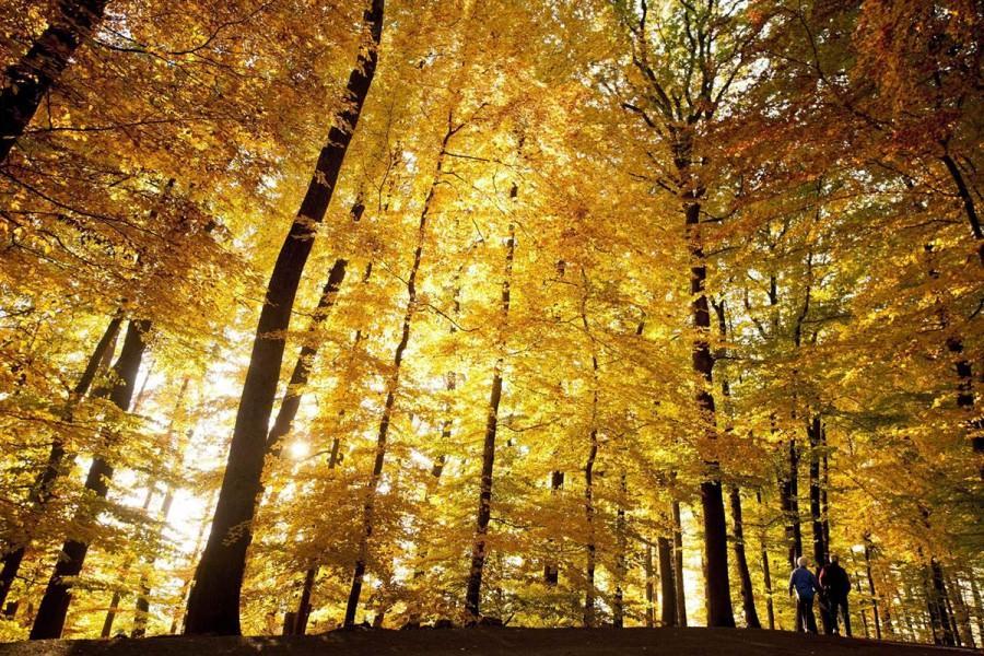 Осенние прогулки по лесу Sauvabelin, Лозанна, Швейцария