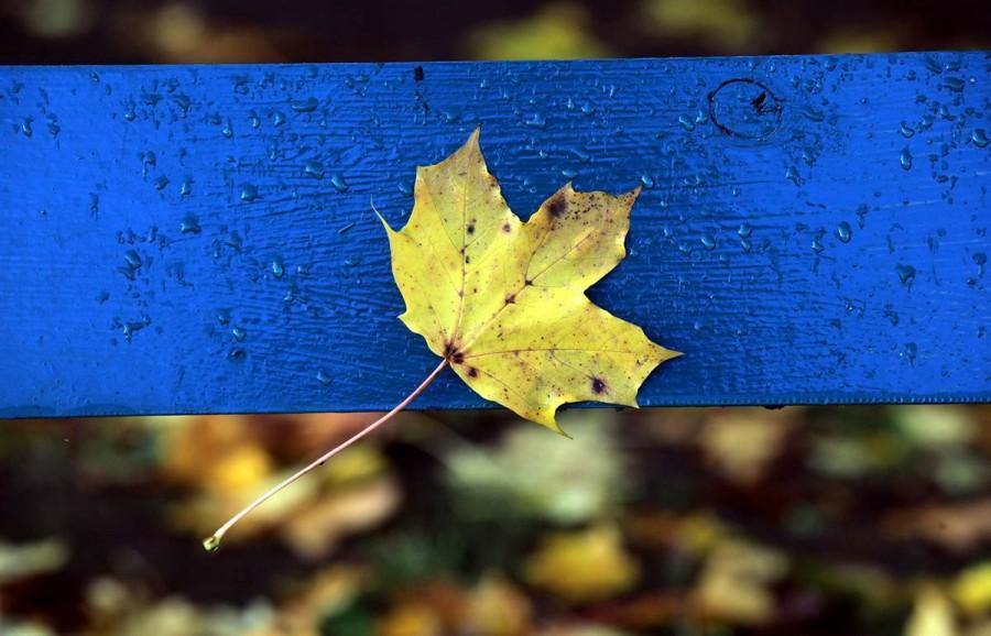 Кленовый лист прилип к скамейке, рядом с Собором в Уэльсе, Англия