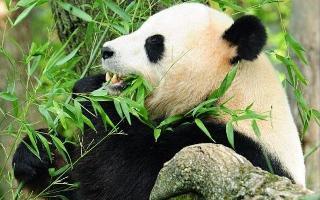 В шотландский зоопарк приедут редкие животные