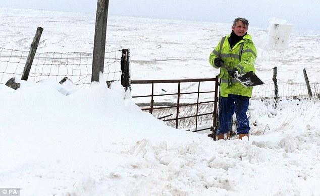 Фермер пытается расчистить ворота в графстве Дарем