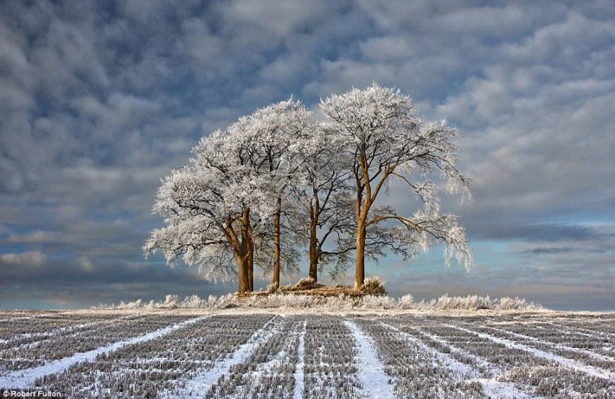 Одинокая планета: мороз покрыл инеем деревья в зимнем поле в Stirlingshire в Шотландии
