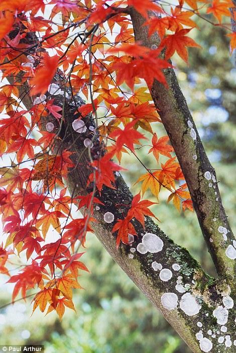 Фейерверк осенних листьев в графстве Глостершир