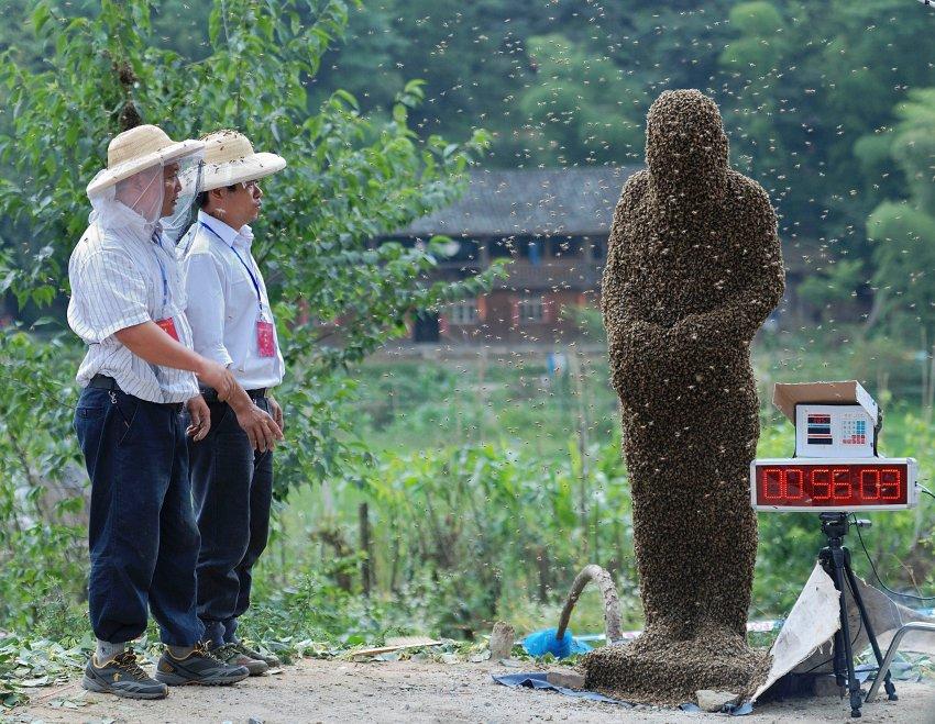 Жужжащая оболочка. Китайский пчеловод Ванг Далин в июле месяце собрал на себе тысячи пчел, которые весили 26,8 кг и выиграл турнир в провинции Хунань