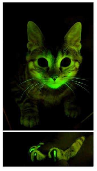 Генные исследования на кошках должны помочь в борьбе против СПИДа