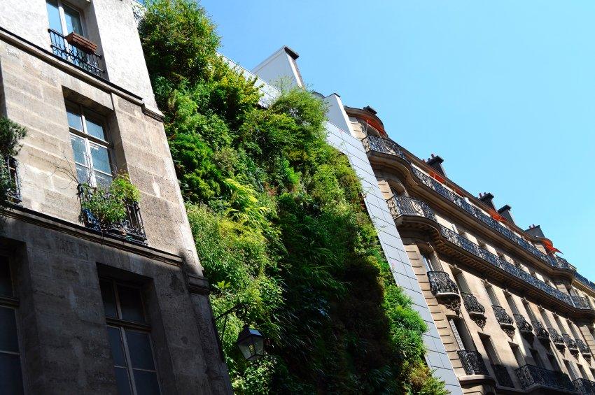 Стена растений на улице де ла Verrerie