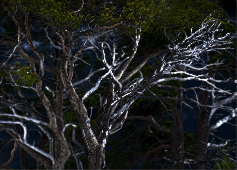 Норвежский лес