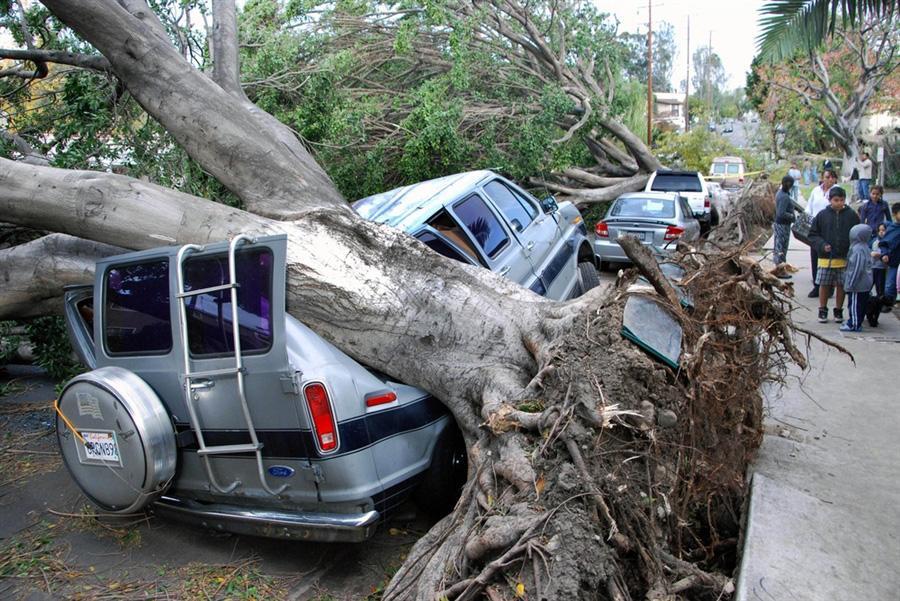 Ураган, пронесшийся над Лос-Анджелесом повалил огромное количество деревьев, искорежил строения и оставил без электричества 300 000 семей в Калифорнии 1 декабря