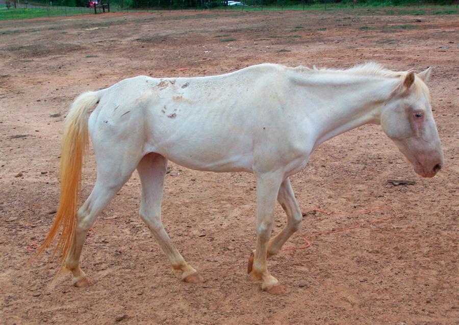 Истощение животных в Техасе из-за продолжающейся засухи в течение 11 месяцев, 3 декабря