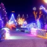 Златко Салай украсил свою усадьбу в Грабовницах 1,2 миллионами разноцветных огней