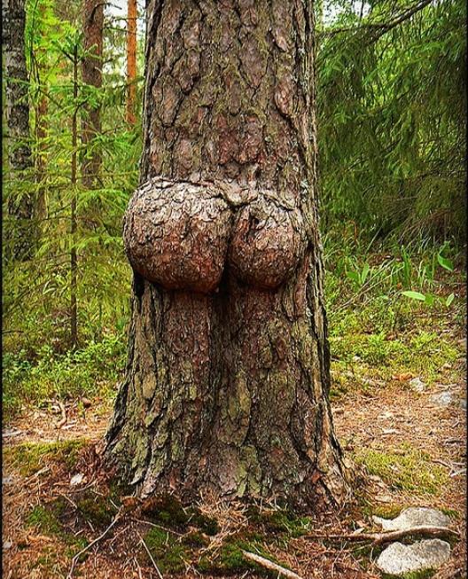 Дерево, где-то на европейских просторах