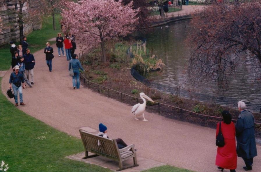 Безмятежная прогулка по лондонскому парку