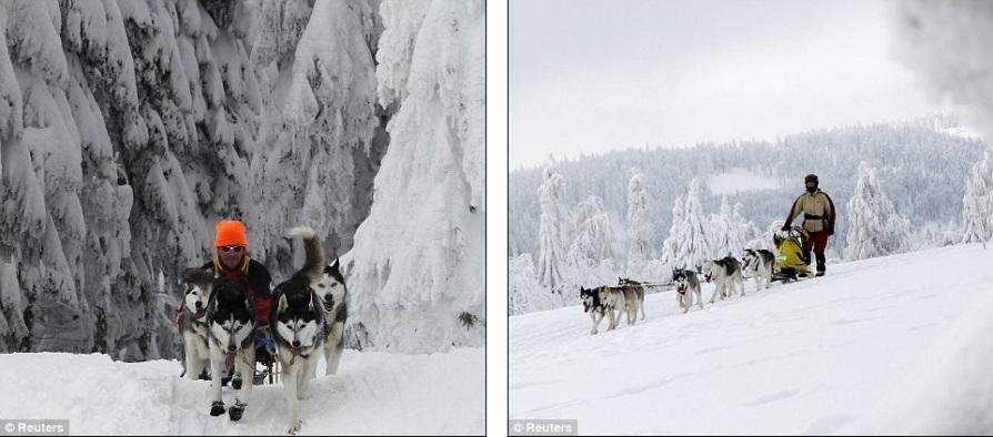 Погонщики со своими собаками на одном из этапов гонки