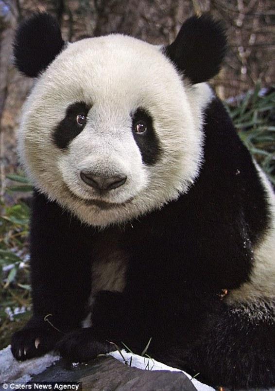 Мягкая улыбка панды