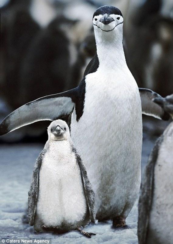 Пингвинья улыбка до ушей