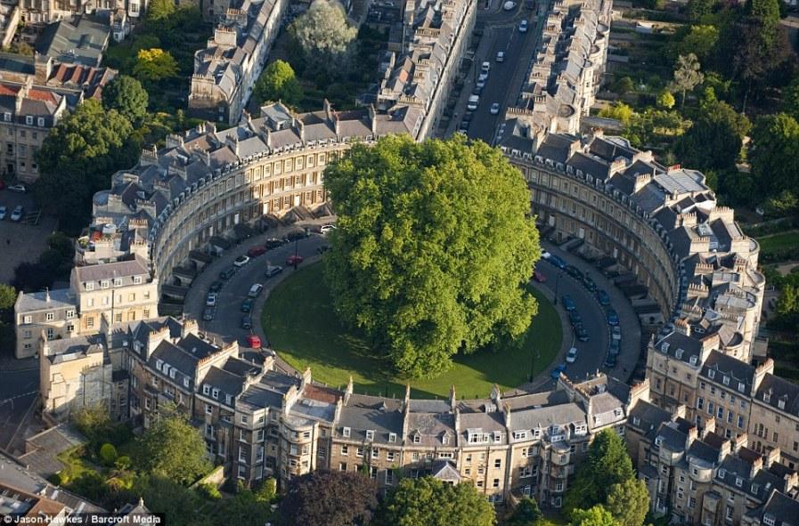 Бат: круговой ряд старинных особняков в парке Сент-Джеймс, смотрят на гигантское дерево