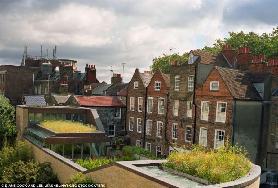 Зеленая крыша дома архитектора Джастина Береша в Islington