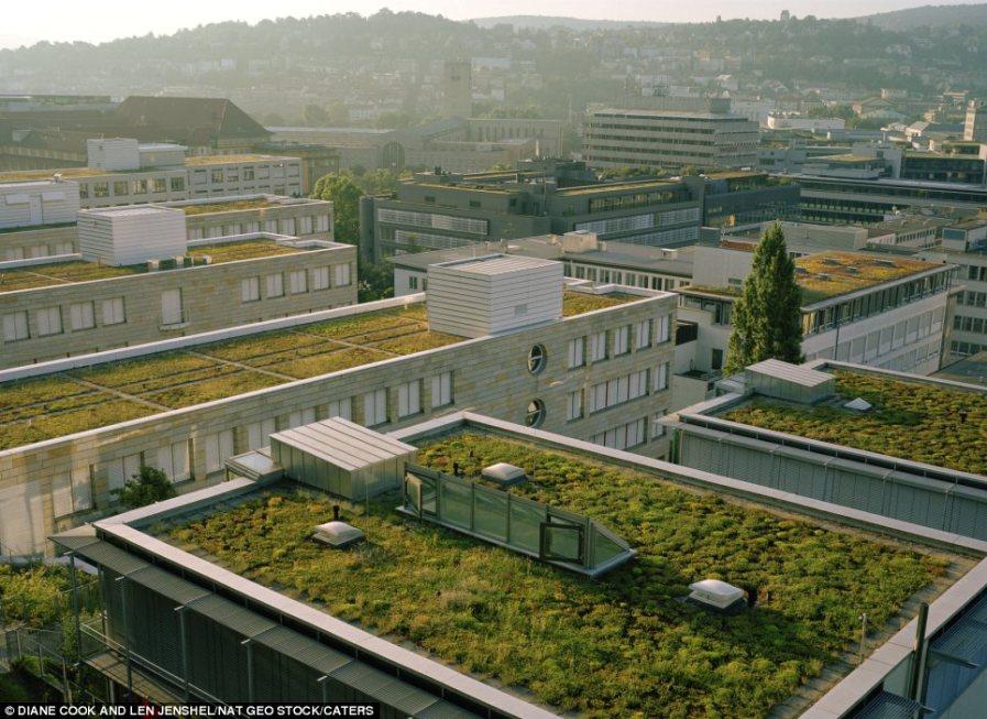 Зеленые горизонты в немецком Штутгарте, начали создаваться с 1989 года