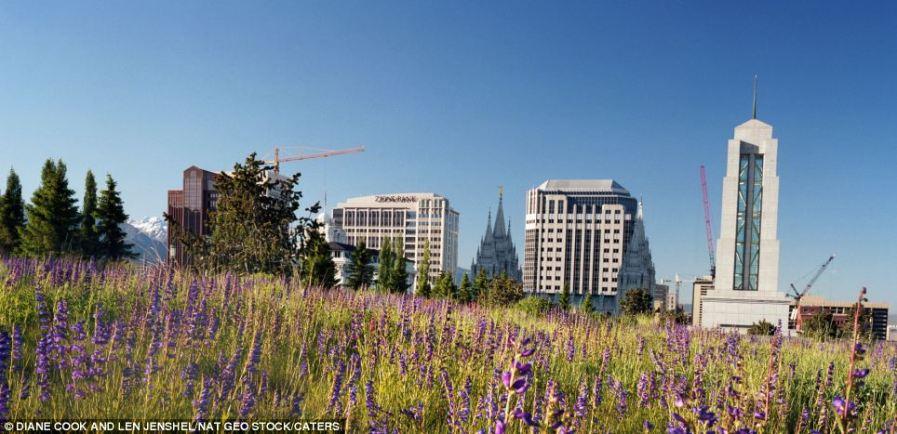 Лавандовые заросли на крыше Конференц Центра в Лондоне