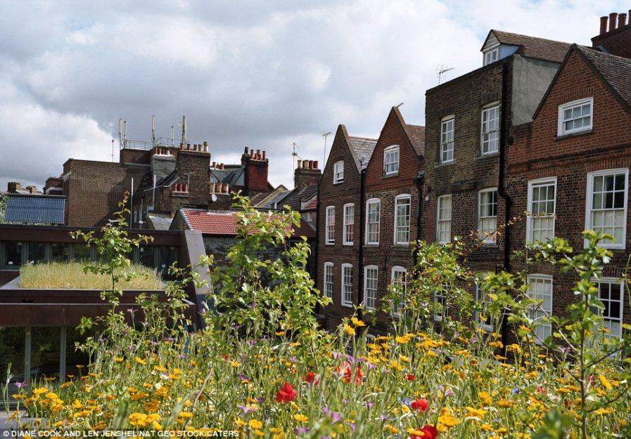 Полевые цветы и солнечные батареи на крыше повышают экологичность этого строения в Британии