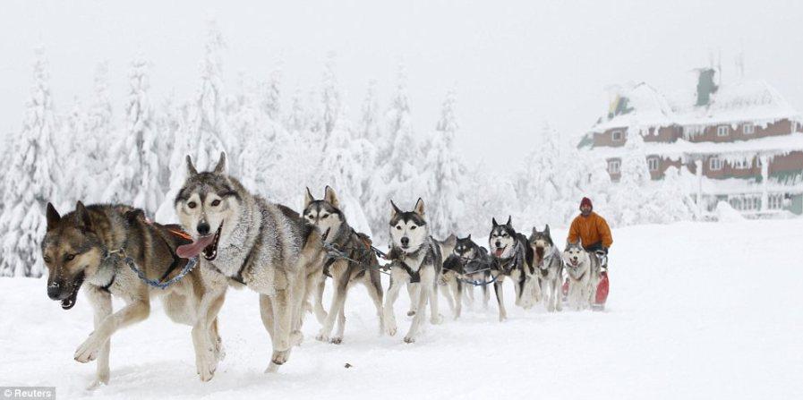 Гонки на собаках считаются самыми сложными на европейском континенте