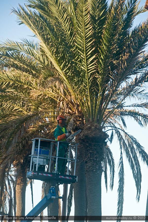 Пальмы в Плайя де лас Америкас