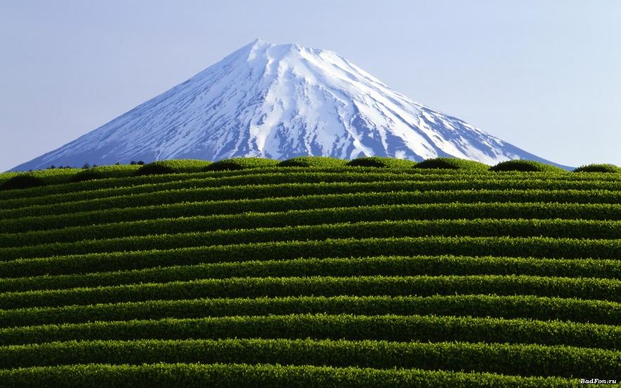 Чай на высокогорье