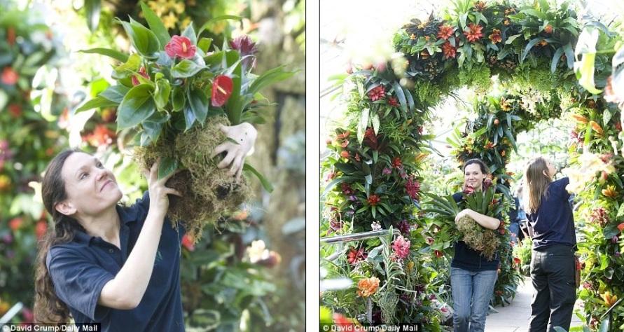 Jasques Barclay принесла дополнительные растения на выставку