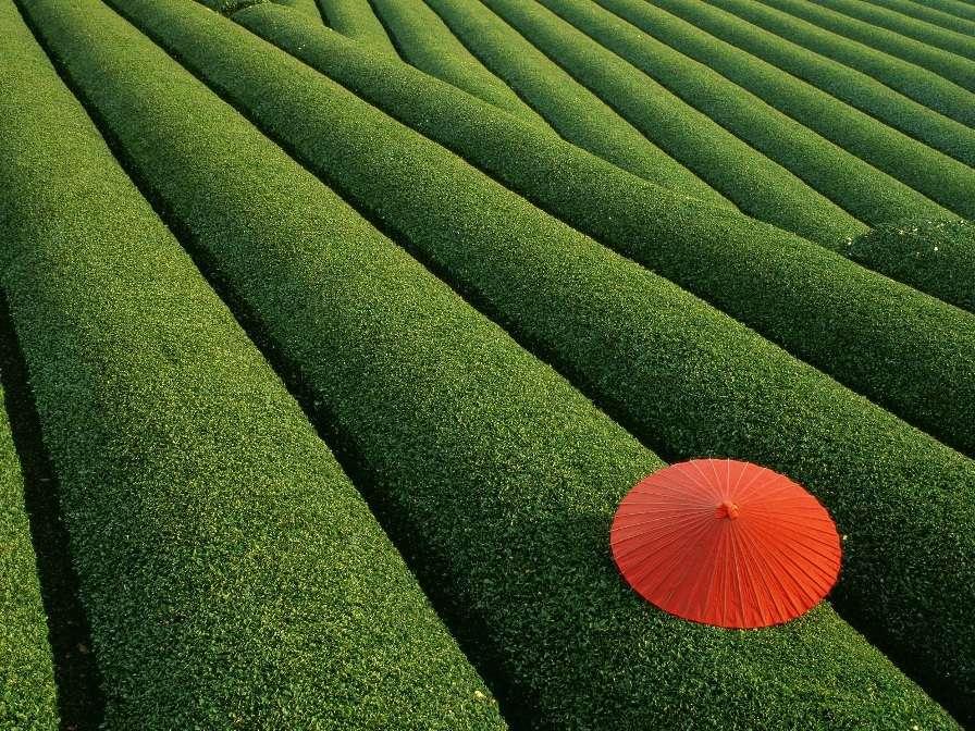 Японские чайные поля